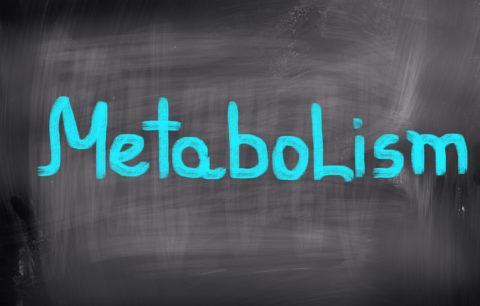 Metabolism – is mine broken?